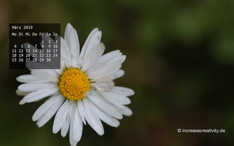 032019-gaensebluemchen-wallpaperliebe-increasecreativity