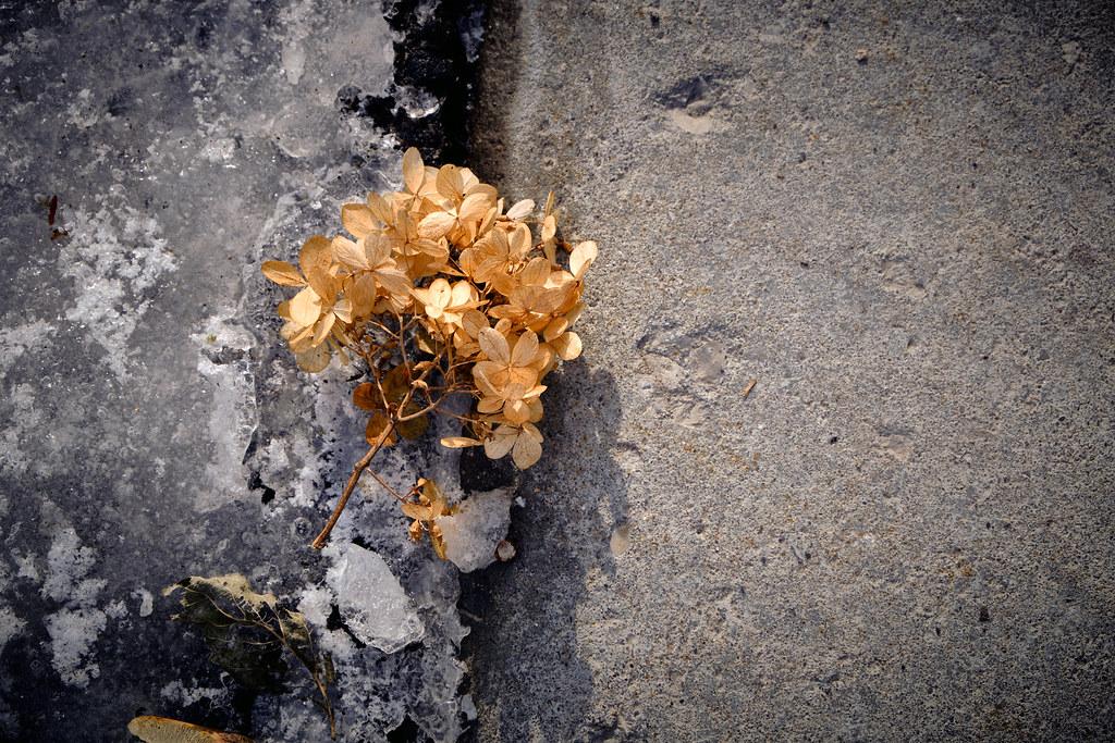 Ice and Concrete
