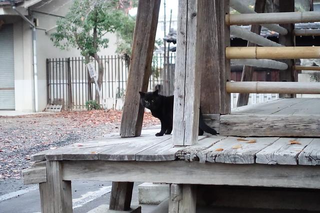 Today's Cat@2019-01-05