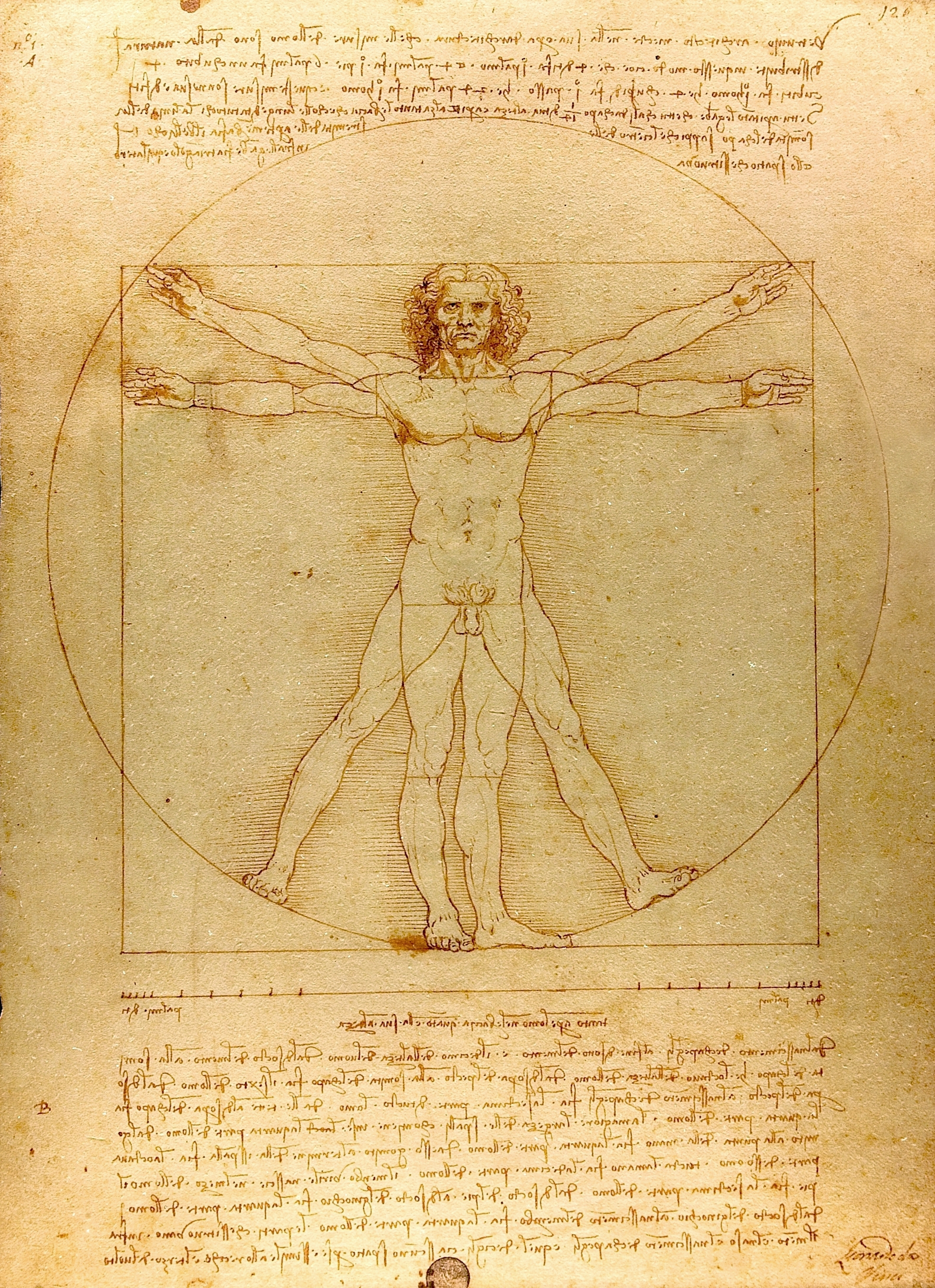 The Vitruvian Man by Leonardo da Vinci, ink and wash on paper circa1492. Currently in the collections of Gallerie dell'Accademia, Venice, Italy.