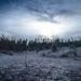 Winter Walk - Dark Path
