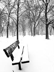 Winter Park Point-Saint-Charles (Montreal)