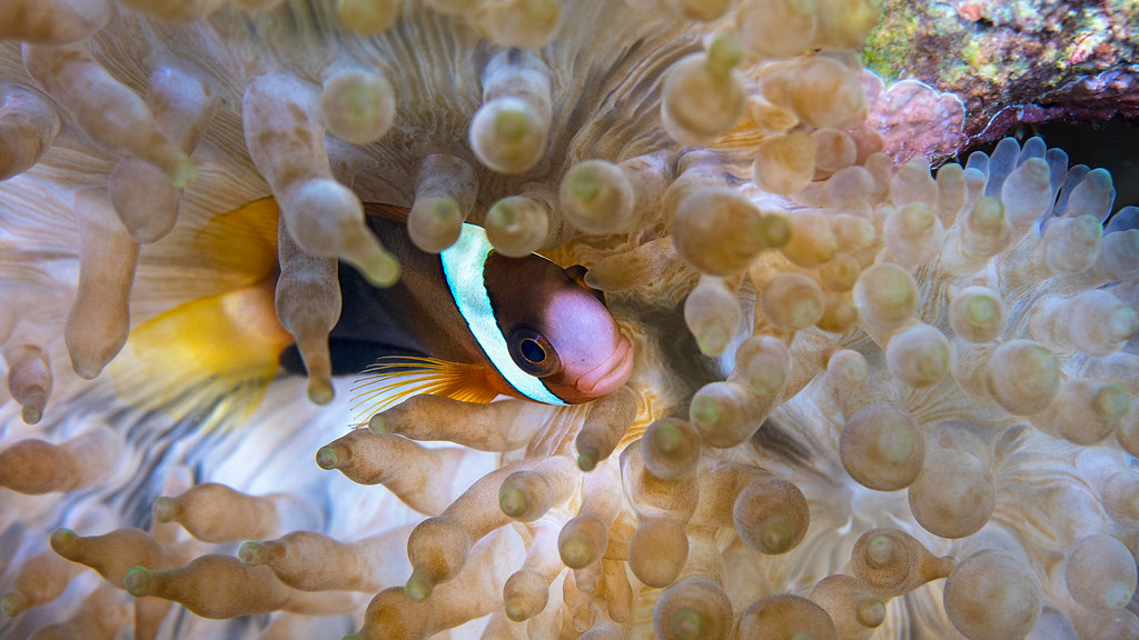 國際百大水下攝影師Yorko Summer最愛台灣潛場在綠島 受邀錄製公視《驚奇VR生態館》呼籲減塑救海洋