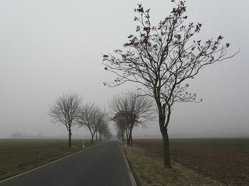 20110316 0203 138 Jakobus Straße Feld Nebel Bäume Allee