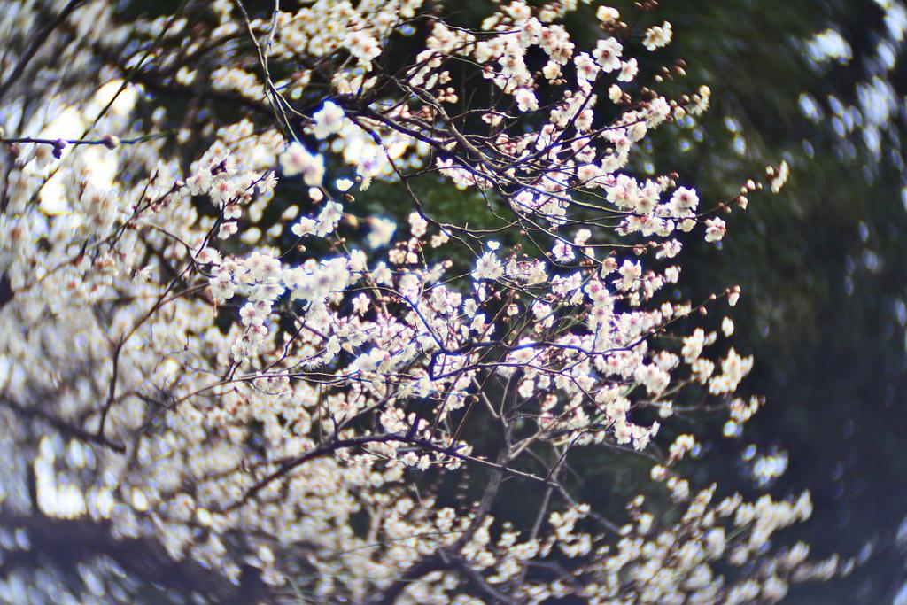 Nikon 1 j5 tv lens 25mm f1.4