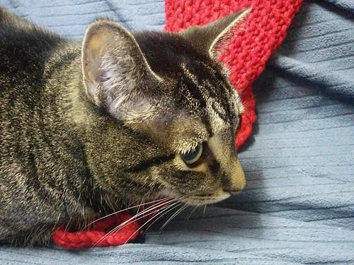 Shakespeare, side profile #toronto #dovercourtvillage #caturday #catsofinstagram #catstagram