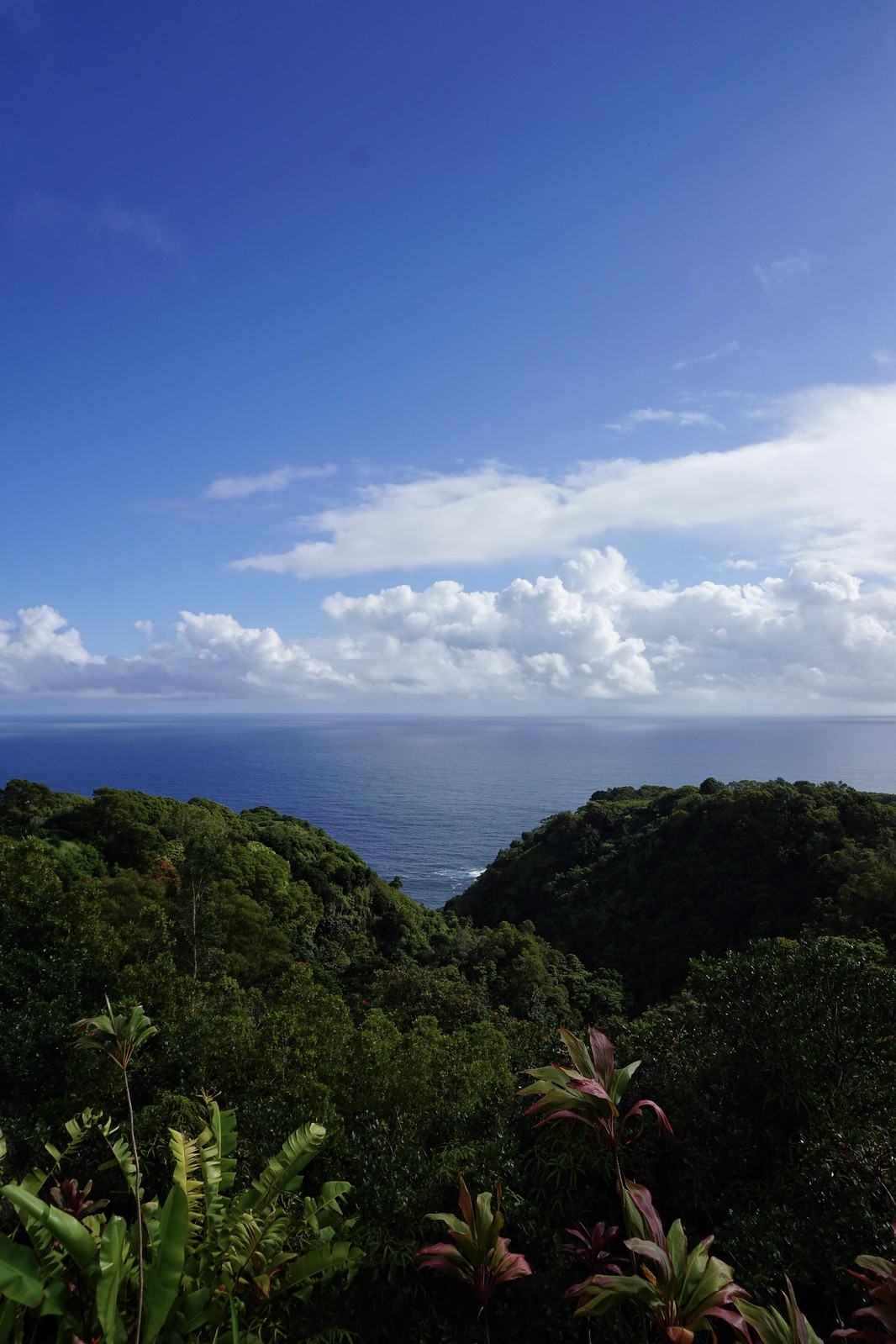 Maui Garden of Eden Arboretum Road to Hana Stops Reasons to Visit Maui Hawaii