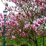 Pink at Avenham Park