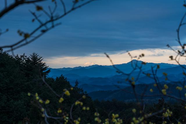 蠟梅越しに富士山僅かに・・・@駒高集落