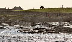 Shoreside Walk IMG_3611