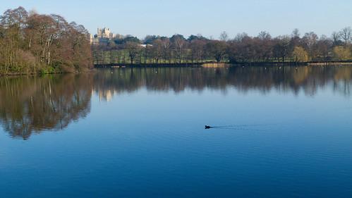 A pleasant prospect: Wollaton Park, Nottingham