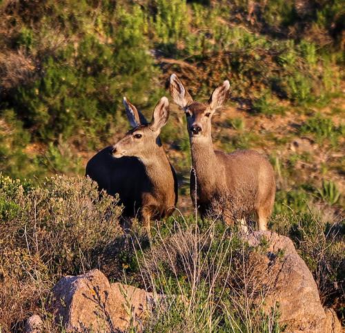 nature landscape deer