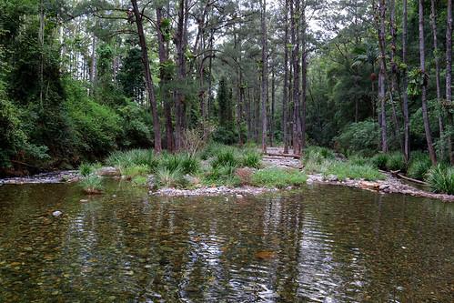 Rosewood River