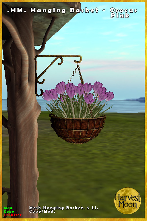 Harvest Moon – Hanging Basket – Crocus Pink