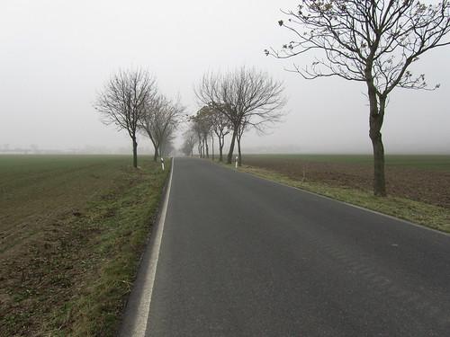 20110316 0203 134 Jakobus Straße Feld Nebel Bäume Allee
