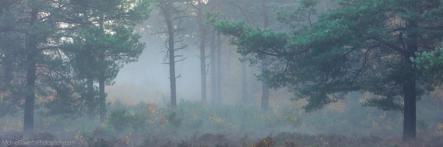 Mist on the Common, Canon EOS 5DS R, Canon EF 70-200mm f/4L IS