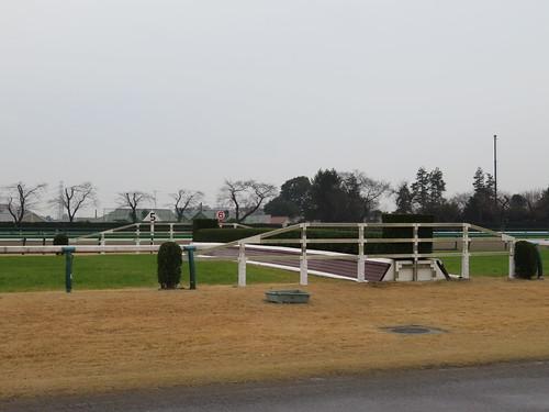 中山競馬場の5号生垣