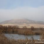 Aves y paisaje con niebla. Lagunas de La Guardia (Toledo) 27-12-2018