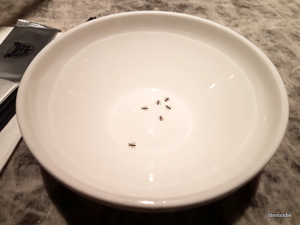 Social Place ant bowl