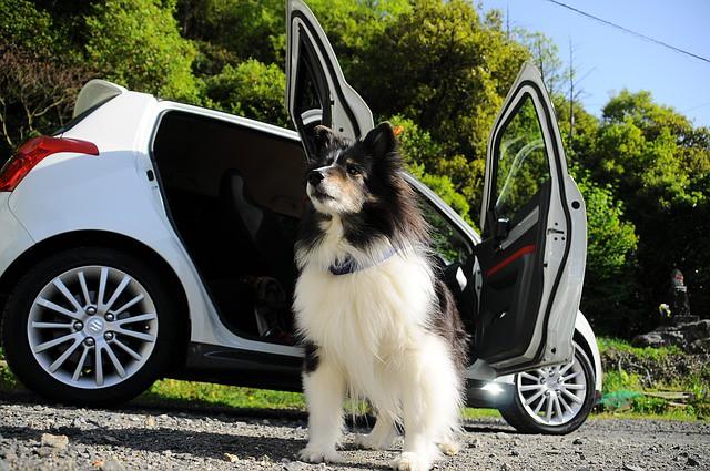 ドライブを楽しんだあとの犬