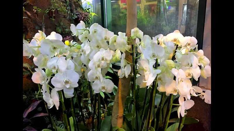 Орхидеи_Средний