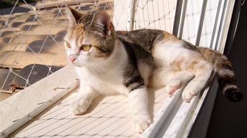 Zoe, gatita tricolor jaspeada divertida y guapa esterilizada, nacida en Septiembre´18, en adopción. Valencia. 46426545354_456caacda5