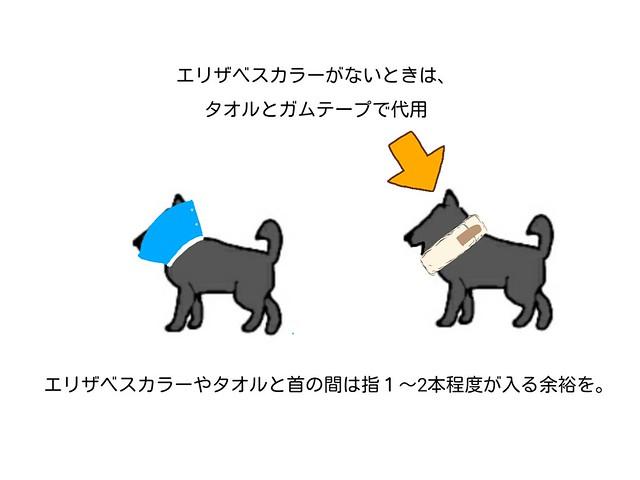 犬がけがをしたときにつけたいエリザベスカラーがないときの対応