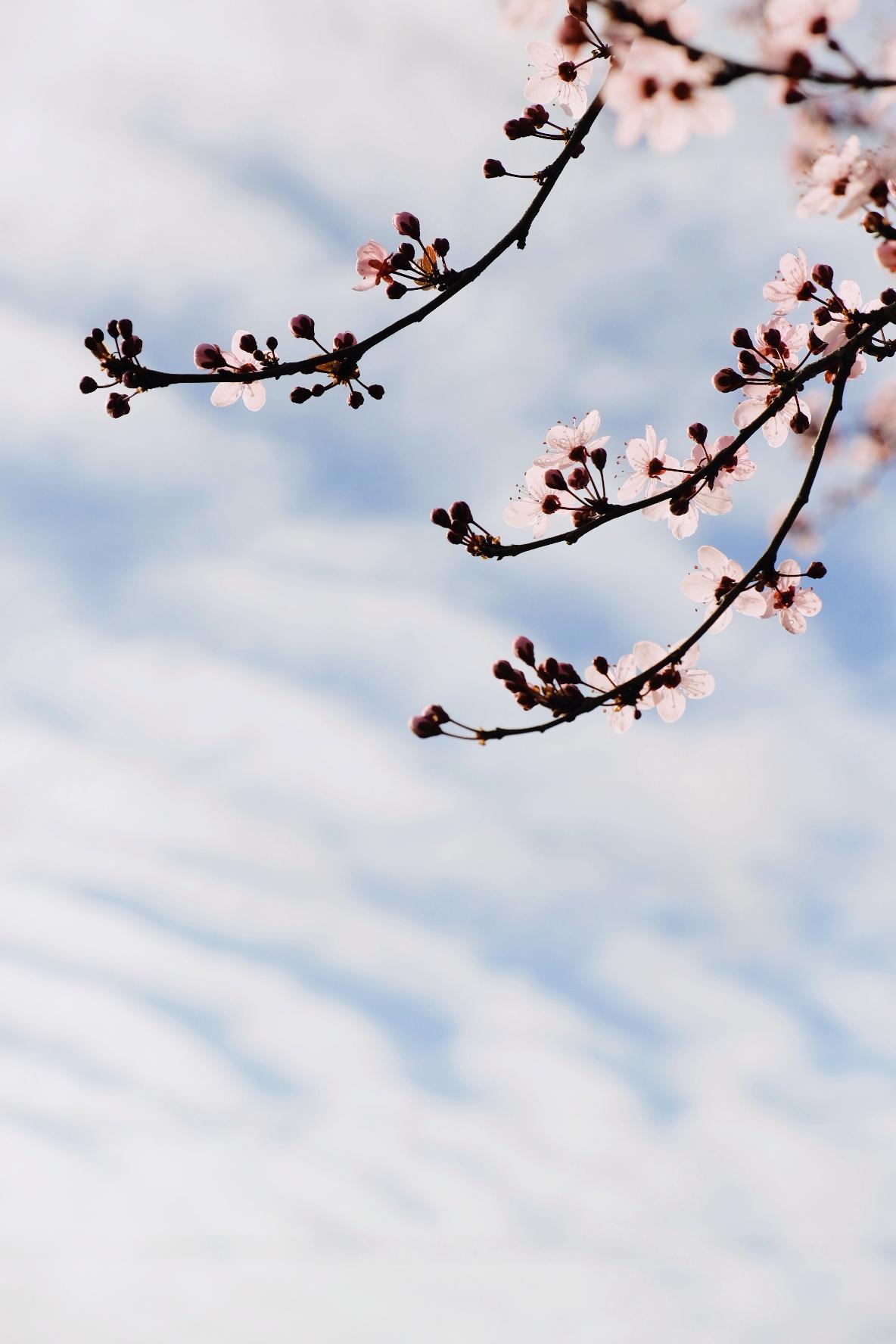 Ébauche de printemps