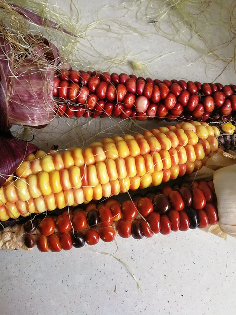3 individual painted mountain corn