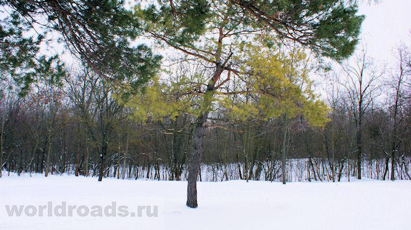 Ботанический сад Ростов-на-Дону