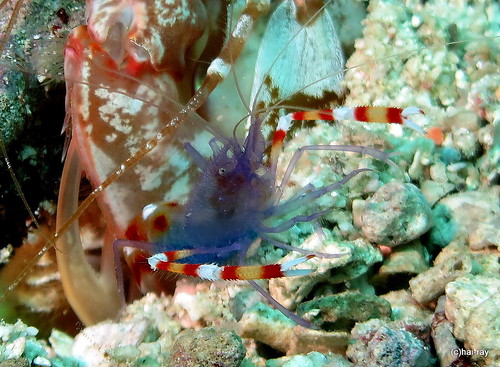 Bohol Anda Diving