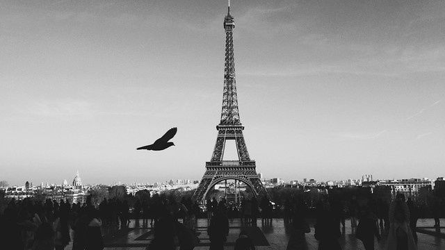 Black and white image of the Eiffel tower and Paris skyline with a dove.
