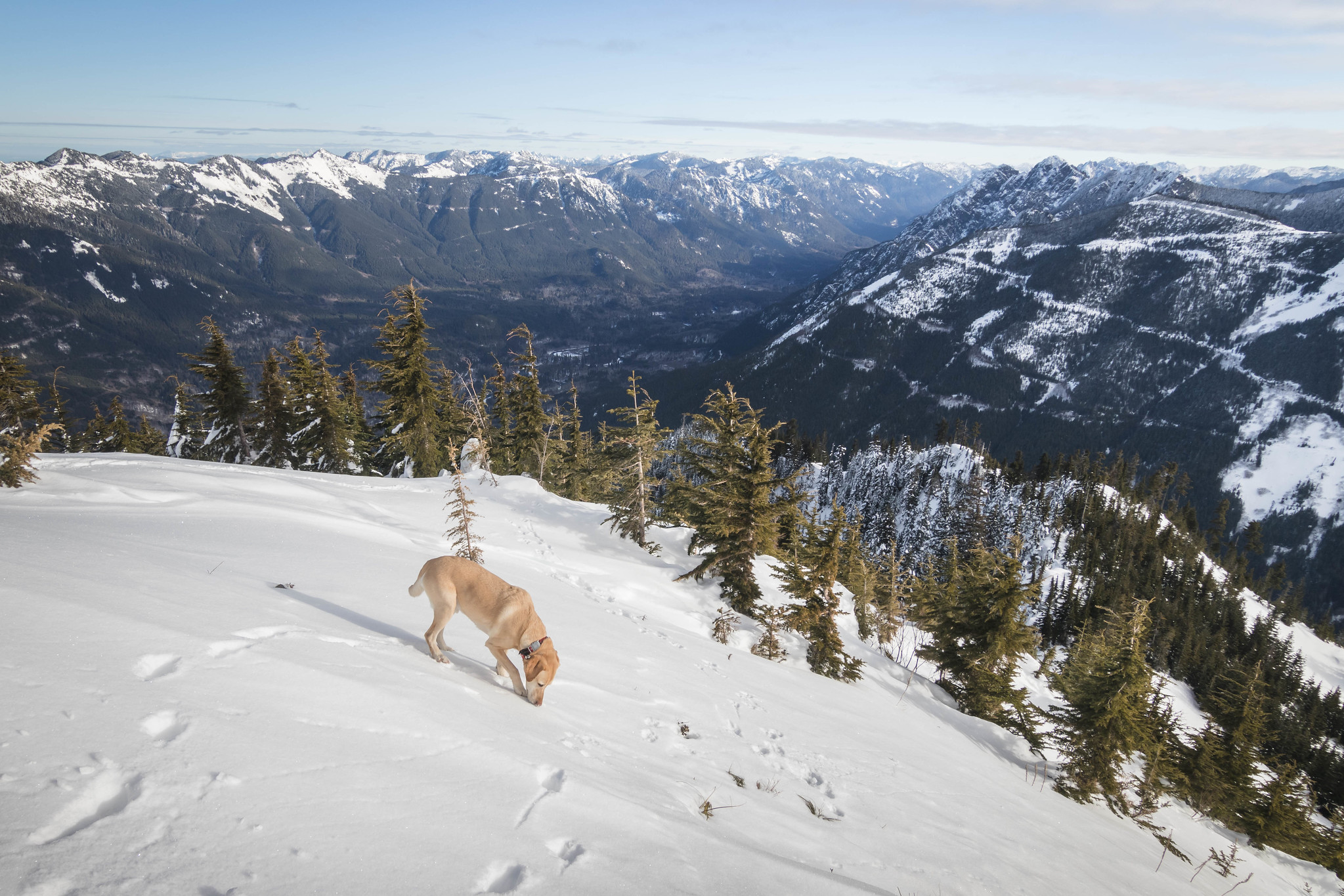 Summit dogs on Mailbox Peak
