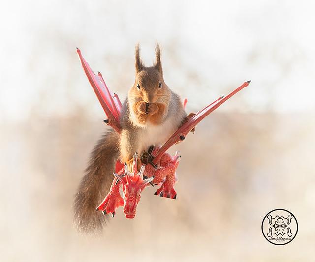 red squirrel sitting on a dragon