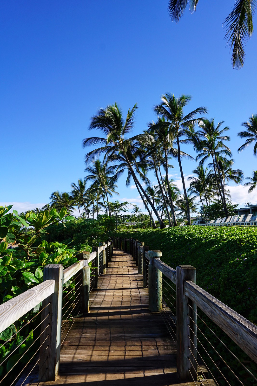 Wailea Beach Path Maui Hawaii Things to do on Maui