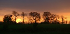 Burning trees at sunset - Photo of Quettreville-sur-Sienne