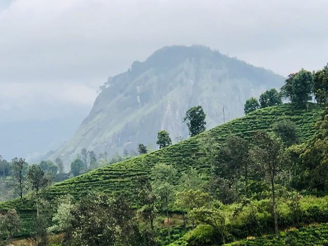 Sri Lanka, Apple iPhone X, iPhone X back dual camera 6mm f/2.4