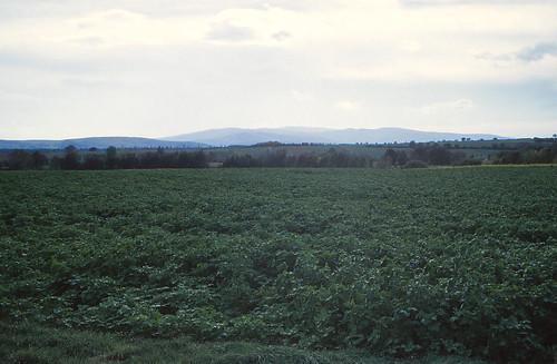 Burgenland Landscape