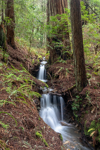 Tamalpais Cascades
