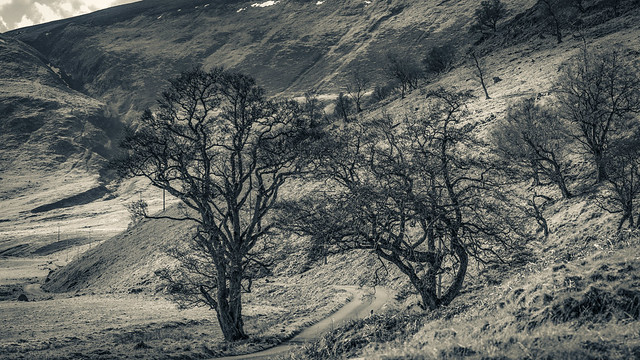 Coignafearn - Near Naked Landscape