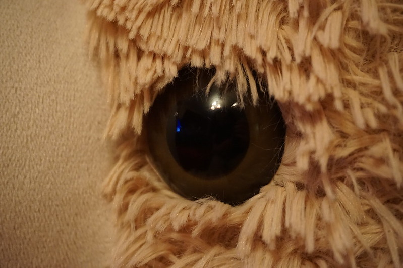 Bear's Eye View