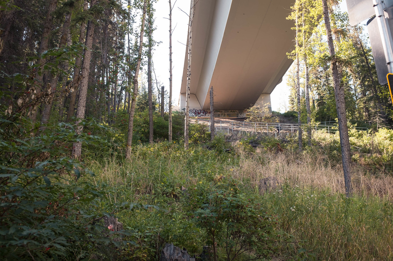 Foresty slope underneath a highway bridge