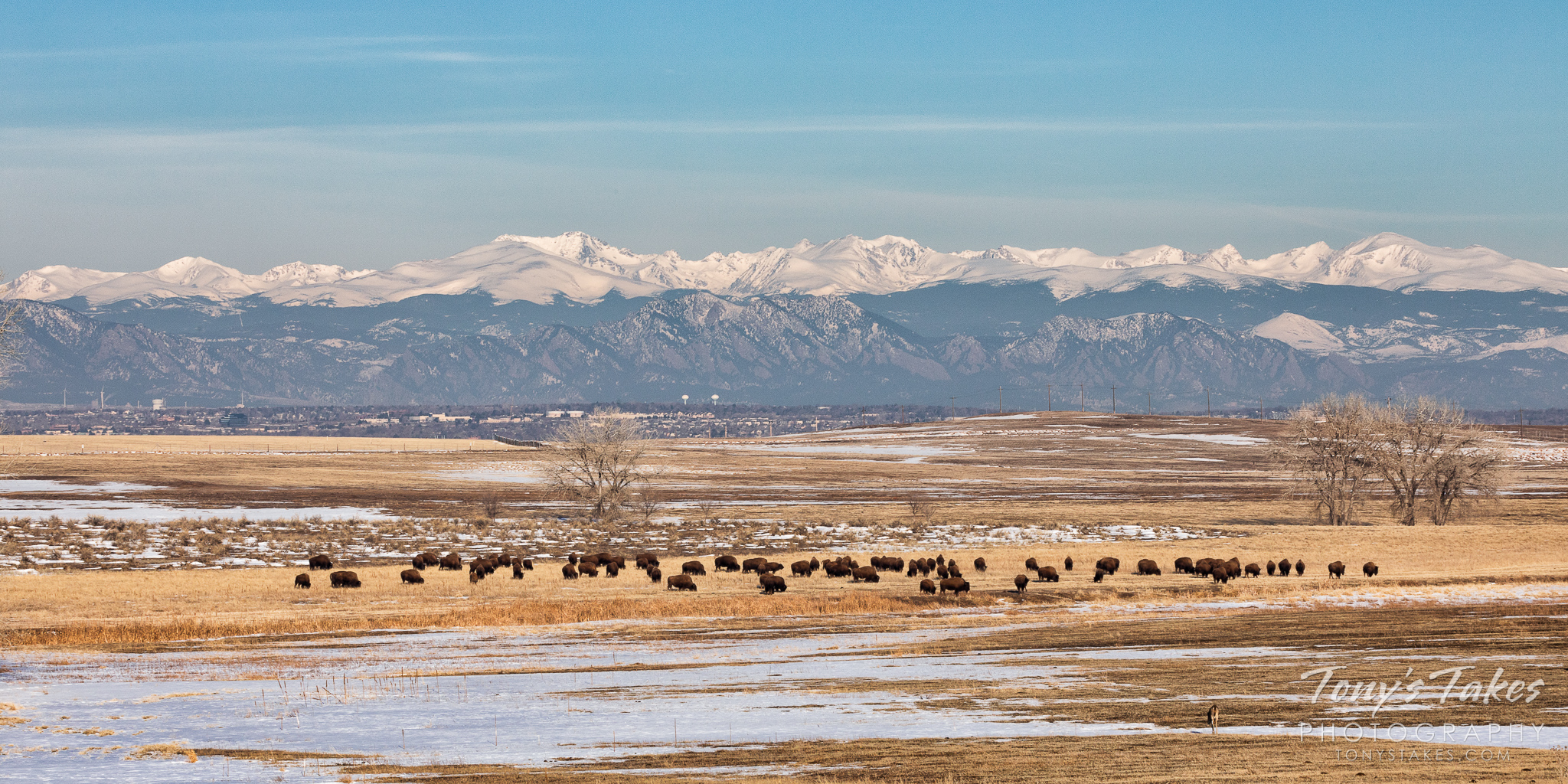 A panorama of the Colorado Front Range with bison grazing in the foreground and the Rocky Mountains in the background. (© Tony's Takes)