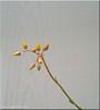 Kakteenblüten - Cactus flower
