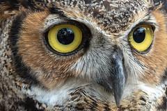 Boyd Hill Nature Preserve - Raptor Fest 2019