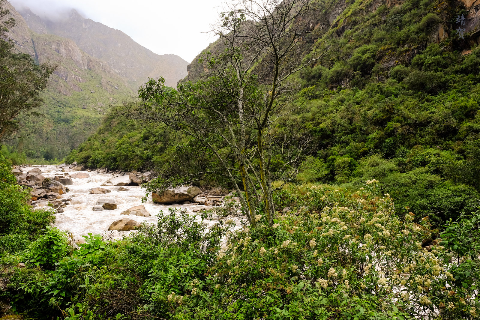 Urubamba river valley ecosystem