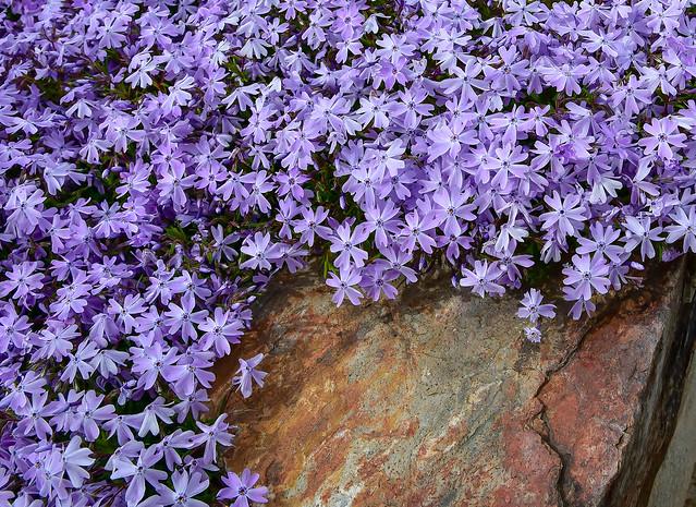 Flowers on stone