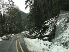 OR 138W fallen trees