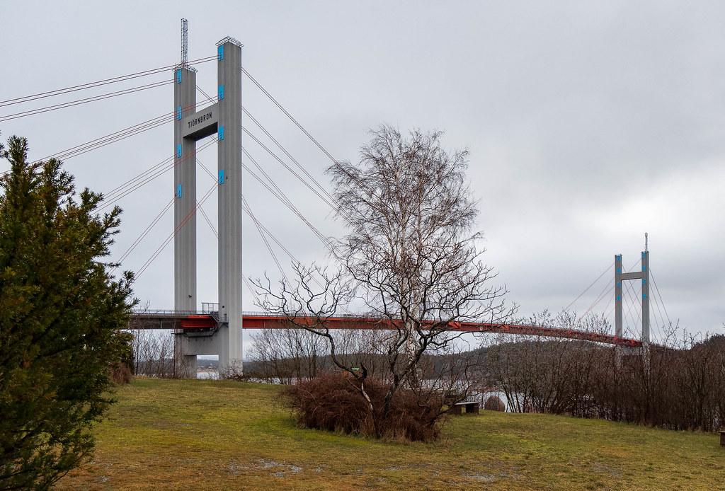 Tree in front of the Tjörn Bridge