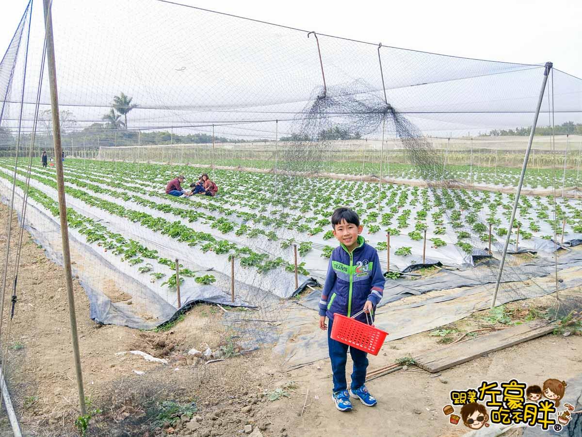 大岡山觀光草莓園-17